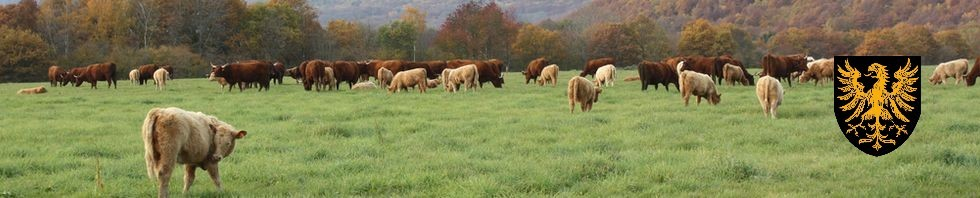 cropped-vaches.jpg